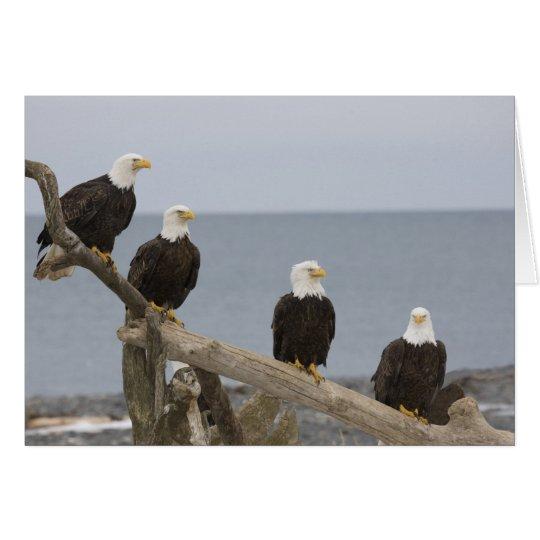 Tarjeta Los E.E.U.U., Alaska, bahía de Kachemak,