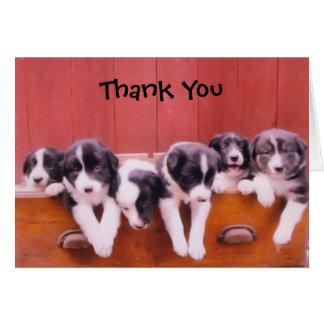 Tarjeta Los perritos lindos del border collie le agradecen