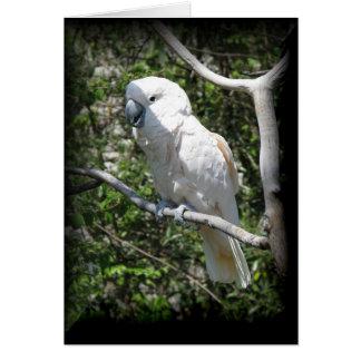 Tarjeta Macaw