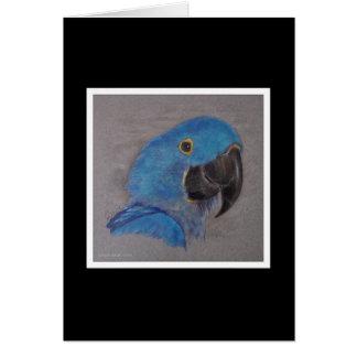 Tarjeta Macaw del jacinto