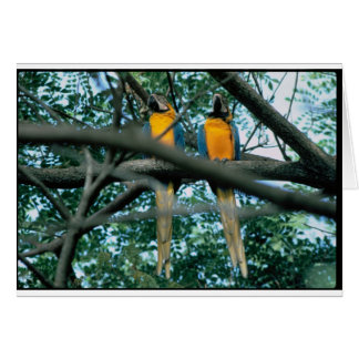 Tarjeta Macaws
