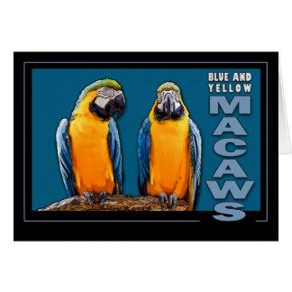 Tarjeta Macaws azules y amarillos