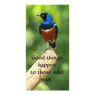 Tarjeta magnífica de la foto de la cita del pájaro tarjeta fotografica personalizada