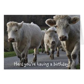 Tarjeta ¡Manada usted está teniendo un cumpleaños!