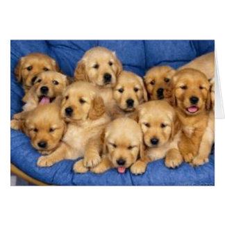 Tarjeta manojo de perritos del perro perdiguero