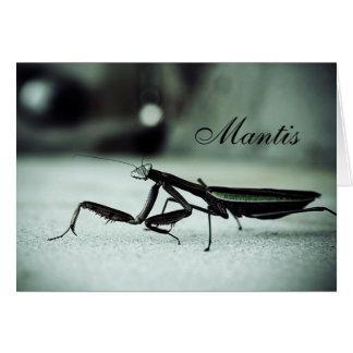 Tarjeta Mantis religiosa