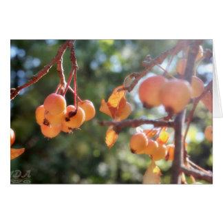 Tarjeta Manzanas de cangrejo maduras