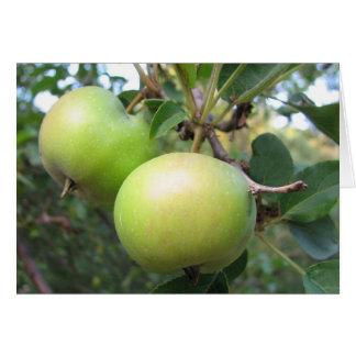 Tarjeta Manzanas de maduración