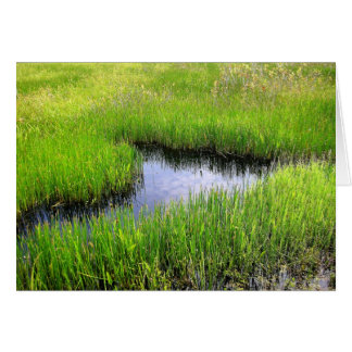 Tarjeta Mar de la hierba