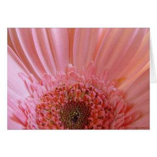 Tarjeta Margarita rosada #731 del Gerbera
