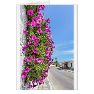 Tarjeta Margaritas españolas rosadas colgantes en la pared