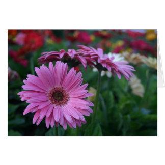 Tarjeta Margaritas rosadas del Gerbera