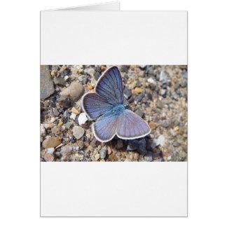 Tarjeta Mariposa azul clara