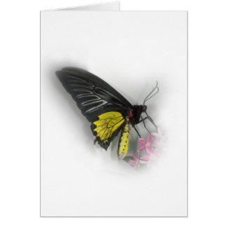 Tarjeta Mariposa común de Birdwing