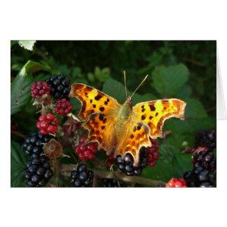 Tarjeta mariposa de coma en las zarzamoras