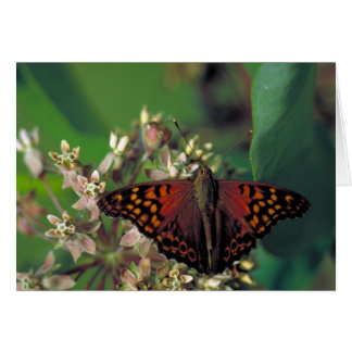 Tarjeta Mariposa de emperador rojiza en Milkweed común