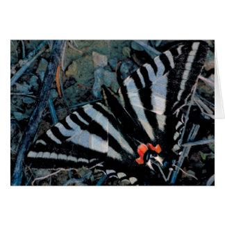 Tarjeta Mariposa de Swallowtail de la cebra