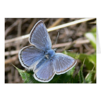 Tarjeta Mariposa masculina azul de la misión