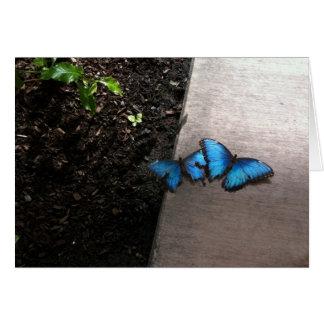 Tarjeta Mariposas azules Notecard