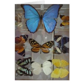 Tarjeta Mariposas de Panamá