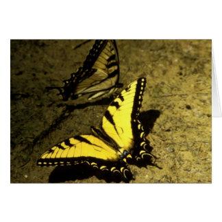 Tarjeta Mariposas de Swallowtail del tigre