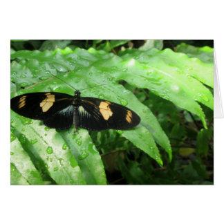 Tarjeta Mariposas tropicales