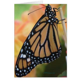 Tarjeta Monarca