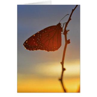 Tarjeta Monarca en la luz de la mañana