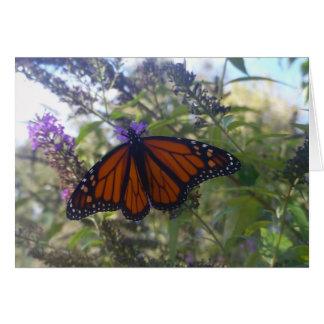 Tarjeta Monarca en la mariposa Bush