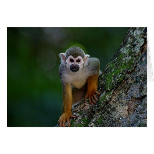 Tarjeta Mono enrrollado