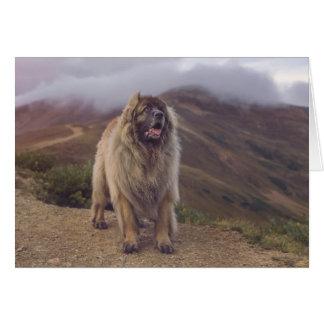 Tarjeta montaña Leonberger