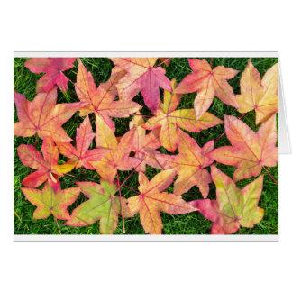 Tarjeta Muchas hojas de arce coloridas del otoño en hierba