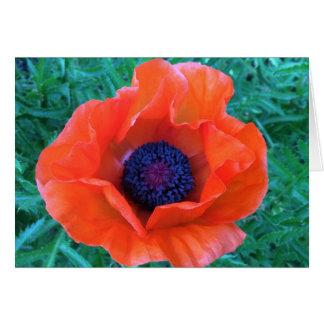Tarjeta Naranja rojo oriental de la AMAPOLA ---