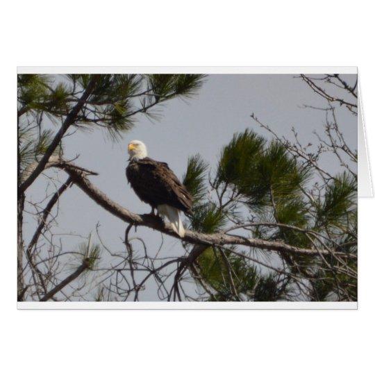 Tarjeta Naturaleza americana de Eagle calvo del pájaro