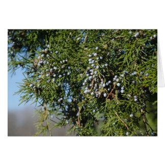 Tarjeta Navidad de la baya del cedro
