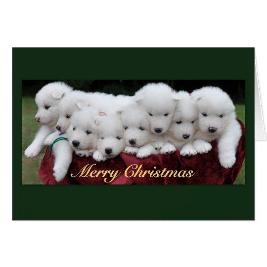 Tarjeta Navidad de los perritos del samoyedo (4 semanas de