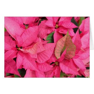 Tarjeta Navidad rosado de la flor del Poinsettia