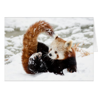 Tarjeta Nieve de la panda roja
