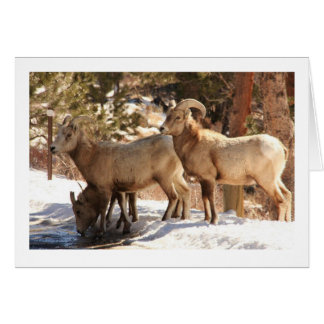 Tarjeta Notecard de las ovejas de Bighorn