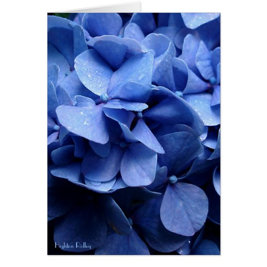 Tarjeta Notelet en blanco/tarjeta de los Hydrangeas azules
