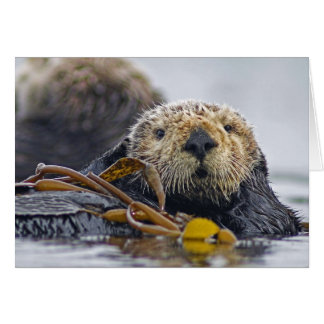 Tarjeta Nutria de mar de California