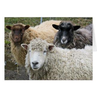 Tarjeta O tenemos gusto de ovejas