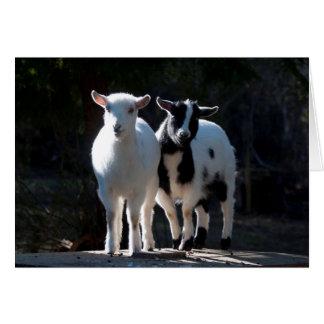 Tarjeta Oh cabras enanas nigerianas tan lindas