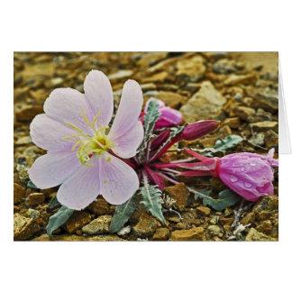 Tarjeta Onagra del desierto Notecard