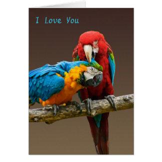 Tarjeta Oro del amor de los loros y Macaw azul de Scarlett