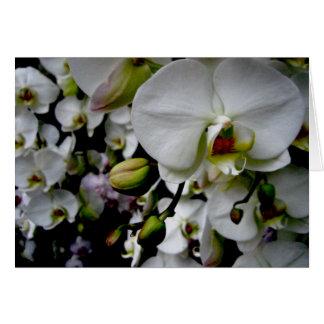 Tarjeta Orquídea blanca Notecard del Phalaenopsis
