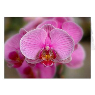 Tarjeta Orquídeas violetas
