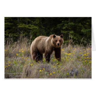 Tarjeta Oso grizzly - Alaska