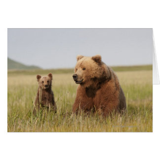 Tarjeta Oso grizzly con Cub