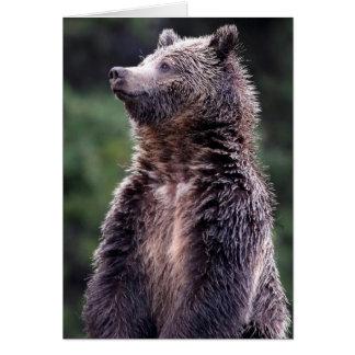 Tarjeta Oso grizzly derecho